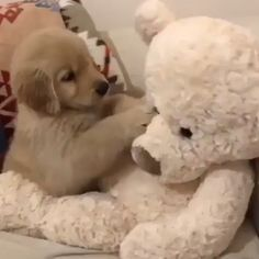 Why kids love puppies Super Cute Puppies, Baby Animals Super Cute, Cute Baby Dogs, Cute Little Puppies, Cute Funny Dogs, Cute Dogs And Puppies, Cute Little Animals, Cute Funny Animals, Cute Cats