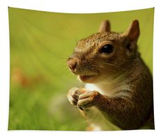 Squirrel, ready for it's close up Tapestry x by Helen Kelly. Our premium tapestries are available in three different sizes and feature incredible artwork on the top surface. Large Tapestries, Wall Tapestries, Tapestry, Basic Colors, Vibrant Colors, My Favourite Subject, How To Be Outgoing, Color Show, Squirrel