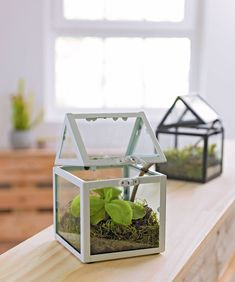 Terrarium ikea and wells on pinterest - Mini serre d interieur ...