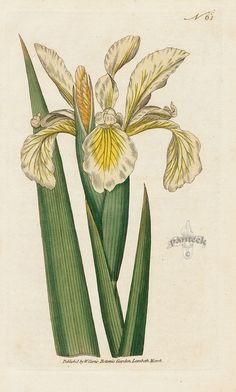 1000+ images about Botanical Prints & Natural Curiosities on Pinterest | Botanical prints ...