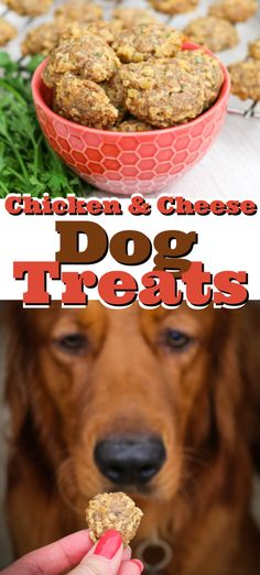 Your dog will love eating these easy homemade Chicken and Cheese Dog Treats made with delicious ingredients like ground chicken, mozzarella cheese, and flaxseed while you protect them from fleas and ticks with Plus. Homade Dog Treats, Diy Dog Treats, Homemade Dog Food, Easy Dog Treat Recipes, Dog Food Recipes, Banana Treats, Grain Free Dog Food, Cheese Dog, Flaxseed