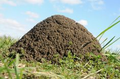 This is an image of a fire ant mound.