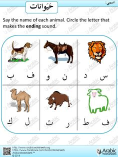 Arabic Letters Sounds - Animal Vocab