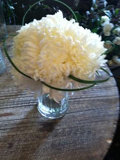 """Vickie's Flowers Your Colorado Wedding Florist Specialist"""" - Wedding Samples Driftwood Wedding Centerpieces, Flower Delivery, Wild Flowers, Wedding Bouquets, Colorado, Aspen Colorado, Wedding Brooch Bouquets, Wildflowers, Bridal Bouquets"""