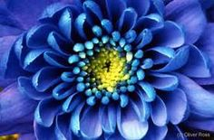 floral closeup photos - Yahoo Image Search Results