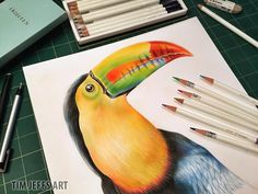 Toucans just totally Rock! Having so much fun drawing this beautiful bird! ‪#‎toucan‬ ‪#‎birds‬ ‪#‎tropicalbirds‬ ‪#‎rainforst‬ Tombow USA Pomegranate Pomegranate Europe Ltd Toucan Rescue Ranch ‪#‎coloredpencils‬ Birds Birds By Joe ‪#‎drawing‬