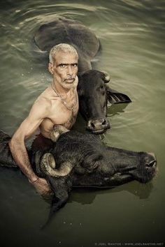 Photo by Joel Santos on - Buffalo herder giving his Buffalos a holy dip in river Ganges, Varanasi, India. Religions Du Monde, Cultures Du Monde, World Cultures, Varanasi, We Are The World, People Around The World, Foto One, Amor Animal, Amazing India