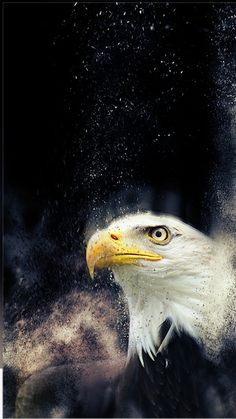 # Be ikta # arcade - Wallpapers Pins ikta Most Beautiful Wallpaper, More Wallpaper, Animal Wallpaper, Image Title, Pin Image, Great Backgrounds, Picture Description, Bald Eagle, Background Images