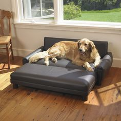 Because Ollie is fancy and needs his own couch. Mission Hills Faux Leather Dog Sofa