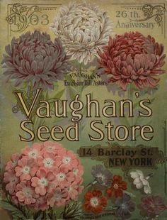 seed packets illustrations and paintings of rhubarb - Google Search