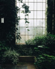 Natur im Innenraum // Fotografie von Haarkon / India & Magnus ( Dark Green Aesthetic, Plant Aesthetic, Nature Aesthetic, Aesthetic Grunge, Aesthetic Vintage, Slytherin Aesthetic, Aesthetic Pictures, Botanical Gardens, Aesthetic Wallpapers