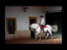 Shake a leg with the dancing horses of Jerez #Spain #TTOT