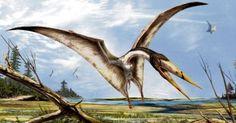Dublin team announce discovery of new Pterosaur genus.