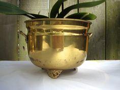 Brass cachepot. Orchid.