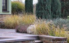 okrasné trávy / ornamental grasses