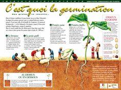 germination - Google Search