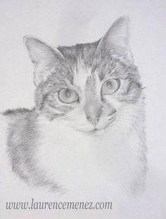 Chat dessiné au fusain et à la mine graphite. Portrait réalisé d'après photo sur papier dessin.