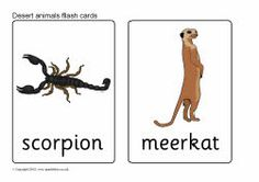 Desert animal flash cards