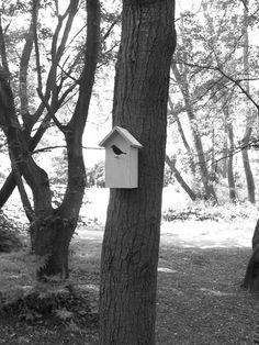 Bird House by Damian O'Sullivan #Bird_House #Damian_O_Sullivan