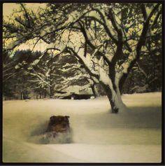 Snow Dog Vermont