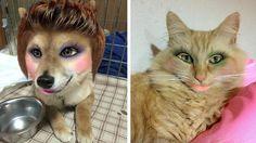 Continúa la tendencia de hacer fotos de mascotas maquilladas - #Apps, #Japón, #Maquillaje, #Mascotas