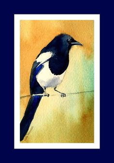Magpie, watercolor by Kim Attwooll