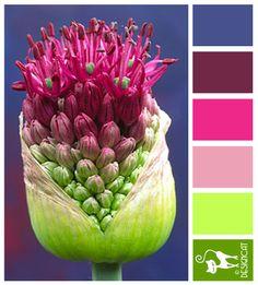 Allium: Pink, Purple, Green - Colour Inspiration Pallet