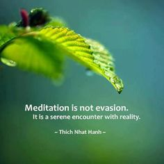 Meditation is not evasion. It is a serene encounter with reality - Thich Nhat Hanh