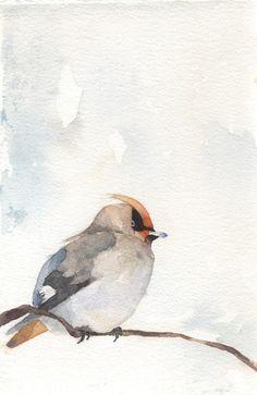 bohemian waxwing. watercolor.