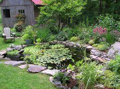 Beautiful backyard pond