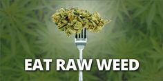 #大麻 は生で野菜サラダのごとくバリバリ食べるべし!火を通しのはよろしくない。Why You Should Be Eating Raw Weed