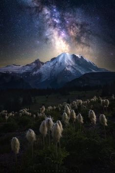 Mt Rainier under a clear Summer night sky. Sky Full Of Stars, Stars At Night, Beautiful Nature Wallpaper, Beautiful Landscapes, Beautiful Scenery, Night Sky Photos, Night Sky Wallpaper, Landscape Photographers, Nature Pictures