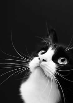 Just love the black and white cat image
