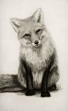 Картинки по запросу fox drawing