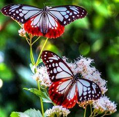 Butterflies via Carol's Country Sunshine on Facebook