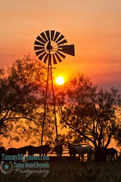 around a windmill at Sunset, pure Texas!gathering around a windmill at Sunset, pure Texas! Horse Photos, Horse Pictures, Cool Pictures, Beautiful Pictures, Farm Windmill, Windmill Art, Pompe A Essence, Old Windmills, Ranch Life