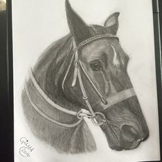"Custom pet portrait pencil drawing of friends horse ""Star"""