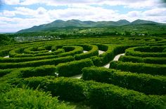 A nice shot across the vortices in the Peace Maze in Northern Ireland