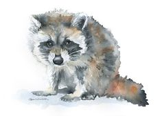 Raccoon Watercolor Painting 5 x 7 Giclee Print por SusanWindsor
