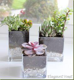 Cactus en pequeños floreros de vidrio.
