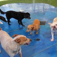 Our New Splash Pad… | Raintree Pet Resort