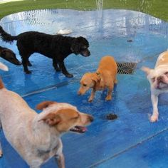 Our New Splash Pad… | Raintree Pet Resort