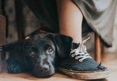 """Todos os anos o Kennel Club, grupo britânico dedicado à proteção de cães, organiza um concurso mundial de fotografia dos animais. A edição de 2017 recebeu mais de 10 mil inscrições vindas de 74 países, e os vencedores foram anunciados nessa semana. Nem precisamos dizer que é sensacional, né? Chamado de Dog Photographer of the Year (algo como """"Fotógrafo de Cães do Ano""""), o prêmio está na 12ª edição. A portuguesa Maria Davison ganhou o prêmio geral e o da categoria """"Melhor Amigo do Homem"""" com…"""