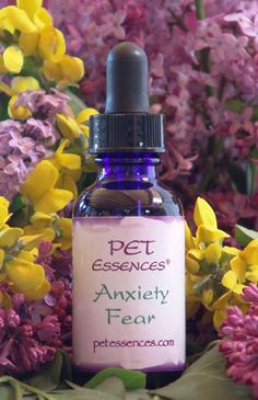 Welcome to Pet Essences- Flower Essence Formulas for Animals    I have used the Arthritis Achy Pain formula for my cat & it started working within just a few days.  7 drops per ounce of water with this remedy   =)