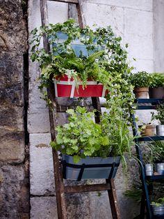 Add an old ladder to your urban garden and hang SOCKER flower boxes. #IKEA #IKEAsummer2016 #CityThroughNewEyes