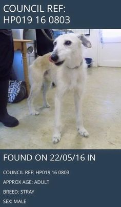 This dog was found in the County Durham are. Do you know him or anyone missing him? Please share and help us find his owner!