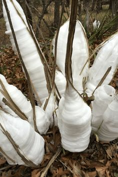 The Frost Flowers are Blooming, Y'all – The Texas Wildflower