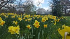 2018 Daffodil Gardens and Events - Pumpkin Beth - Mana vietne Daffodil Bulbs, Daffodils, Sussex Gardens, Longwood Gardens, Orange Flowers, Growing Plants, Days Out, Wonderful Places, Botanical Gardens