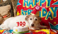 Is this Britain's oldest dog? Runt of the litter who was rescued turns 22 years old - the equivalent of a human being 100