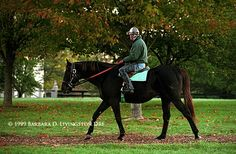 Seattle Slew, at age 25 in 1999, out for his daily exercise